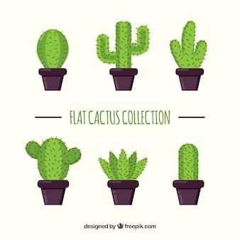Catus collectie met vlak ontwerp