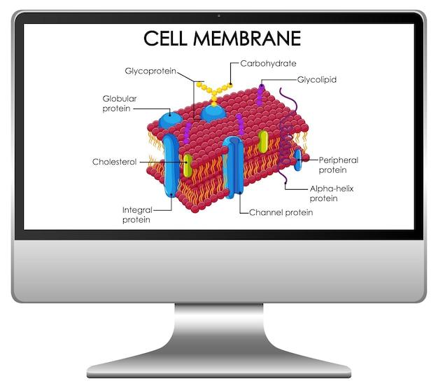 Celmembraanstructuur op computerdesktop