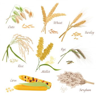 Cereal plants vector icons set
