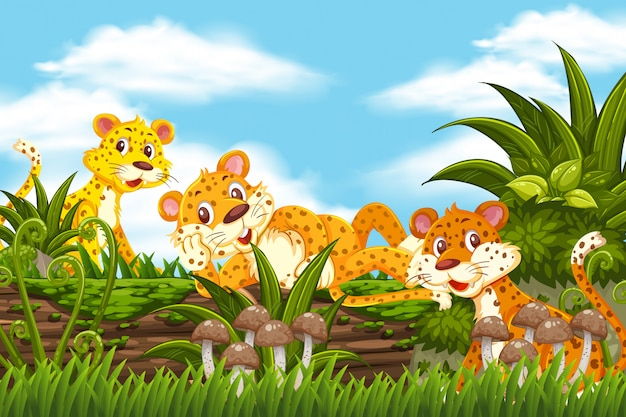 Cheetah in jungle scene