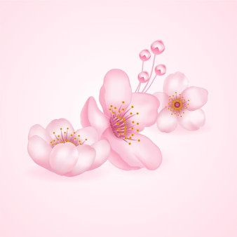Cherry blossom, sakura illustratie.