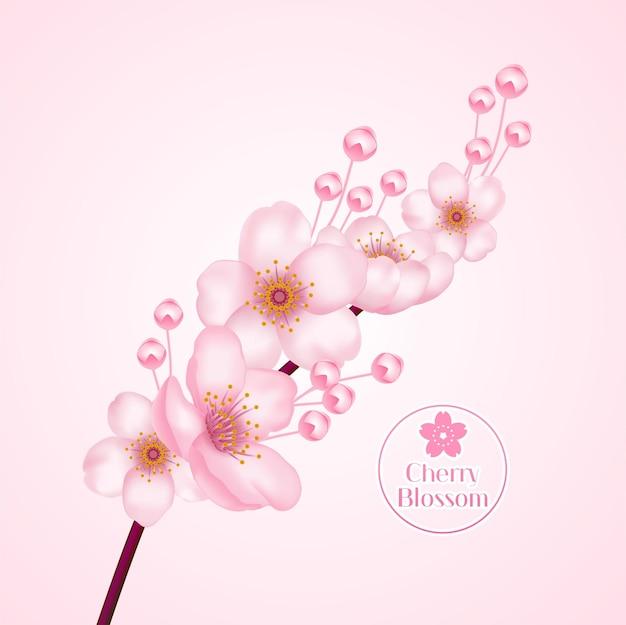 Cherry blossom, sakura tak met roze bloemen illustratie.