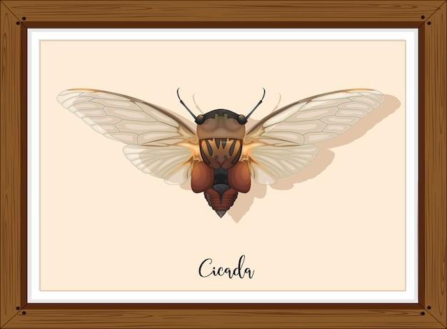 Cicade op houten frame