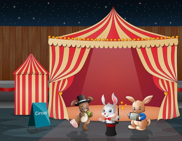 Circusdierenshow en acrobaatvoorstelling in de arena