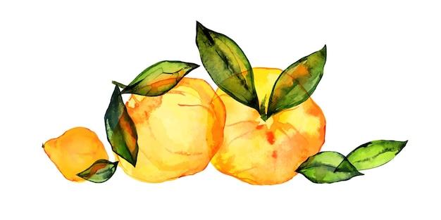 Citrusvruchten boeket door getraceerde aquarel. leuk decor voor huis- en cafétextiel, voor verpakkingsdecor en menu