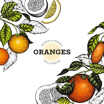 Citrusvruchten ontwerpsjabloon. hand getekend vectorillustratie fruit in kleur.