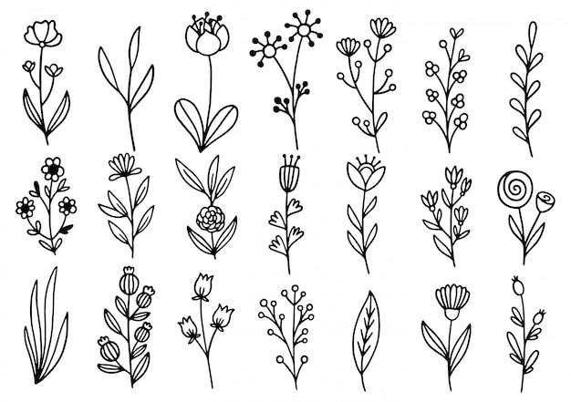 Collectie bosvaren eucalyptus kunst gebladerte natuurlijke bladeren kruiden in lijnstijl. decoratieve schoonheid elegante illustratie voor ontwerp hand getekende bloem