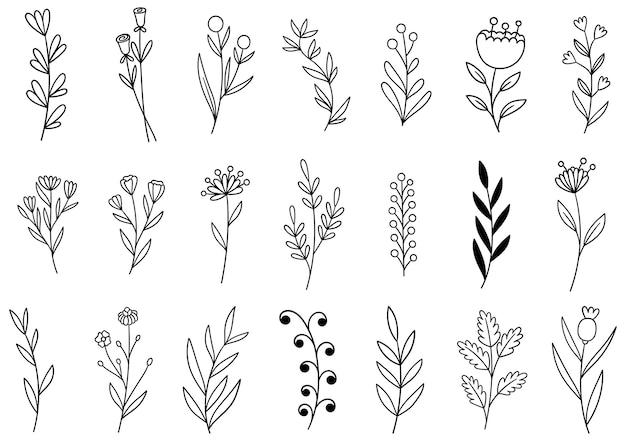 Collectie bosvaren eucalyptus kunst gebladerte natuurlijke bladeren kruiden in lijnstijl.