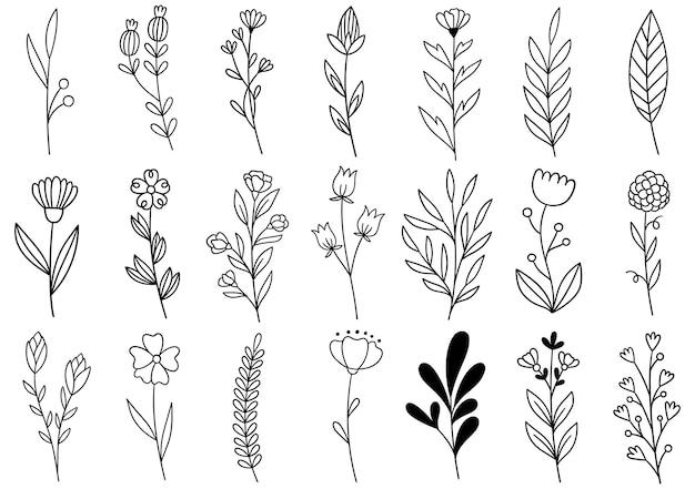 Collectie bosvaren eucalyptus kunst gebladerte natuurlijke bladeren kruiden in lijnstijl