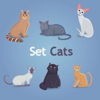 Collectie katten van verschillende rassen.