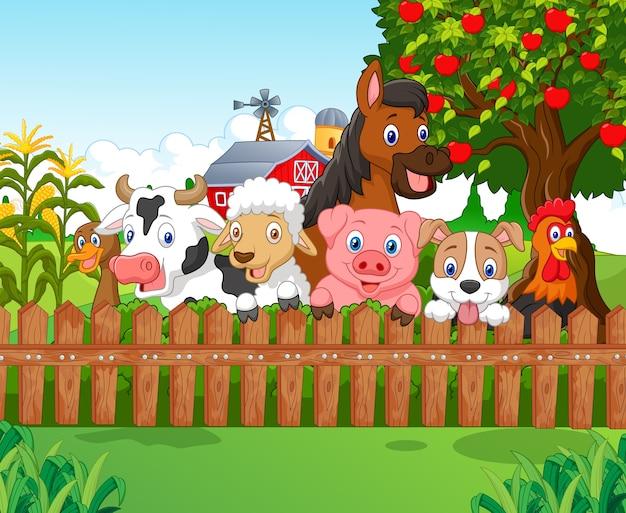 Collectie landbouwhuisdieren
