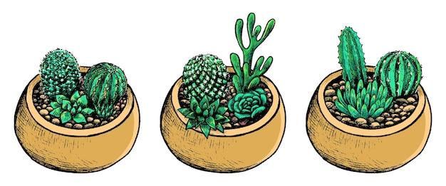 Collectie potten met cactussen, vetplanten. vintage botanische set met kamerplanten in schetsstijl. hand getekend vectorillustratie. kleurrijke elementen geïsoleerd op wit voor design.