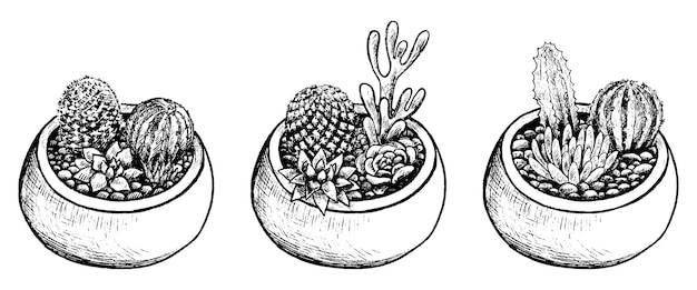 Collectie potten met cactussen, vetplanten. vintage botanische set met kamerplanten in schetsstijl. hand getekend vectorillustratie. zwarte elementen geïsoleerd op wit voor design.