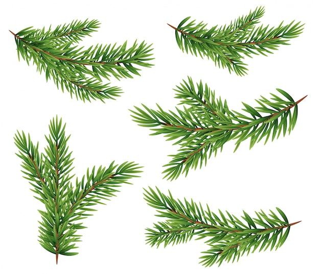 Collectie set van realistische fir takken silhouet voor kerstboom, pine.