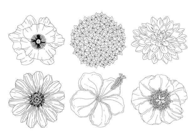 Collectie set zomerbloemen. papaver, hortensia, dahlia, pioenroos, hibiscus, asterknoppen.