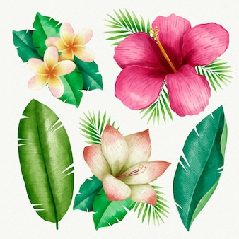 Collectie tropische planten geïllustreerd
