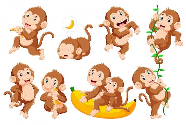 Collectie van aap in verschillende poses