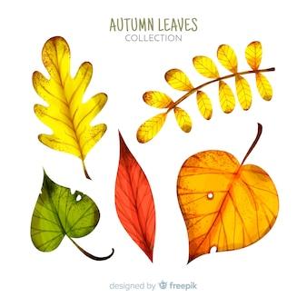 Collectie van aquarel herfstbladeren