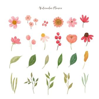 Collectie van aquarel wilde bloemen