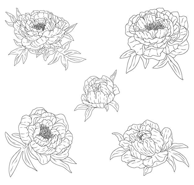 Collectie van contour pioenrozen. mooie zachte bloemen. hand getekende vector illustratie set. botanische schetsen geïsoleerd op wit. vintage-stijl.