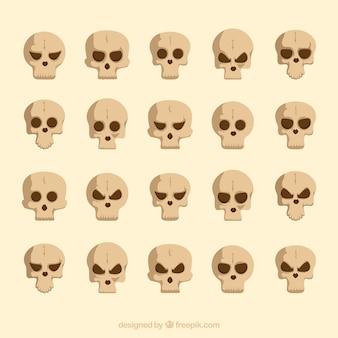 Collectie van de schedel