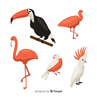 Collectie van exotische vogels met een vlak ontwerp