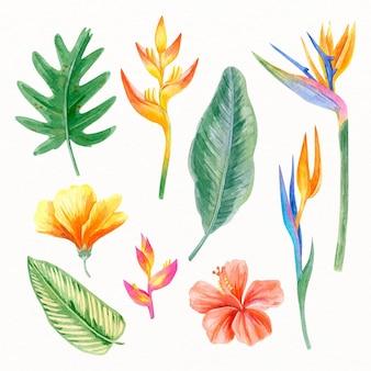 Collectie van geschilderde tropische bloemen en bladeren
