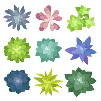 Collectie van kamerplanten bovenaanzicht. flora concept