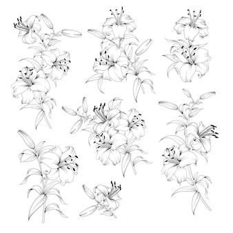 Collectie van lelie bloemen op zwart en wit