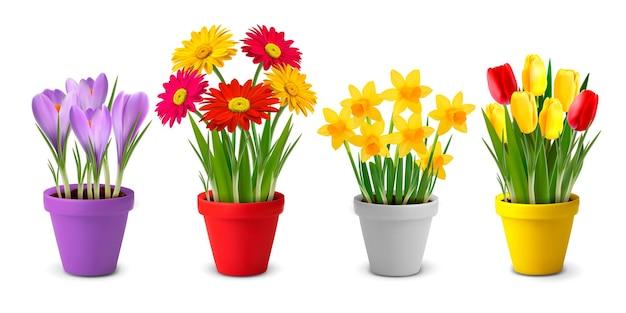 Collectie van lente en zomer kleurrijke bloemen in potten