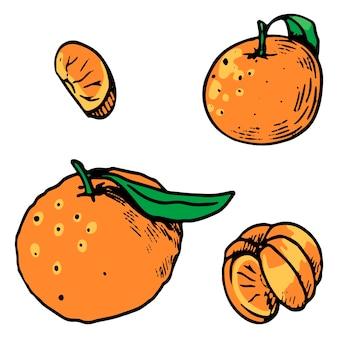 Collectie van mandarijnen, citrusvruchten. hand getekende vectorillustraties. set gekleurde elementen geïsoleerd op wit. schetstekeningen voor ontwerp, decor, prints, stickers, kaart.