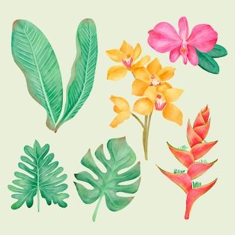 Collectie van tropische bladeren en bloemen