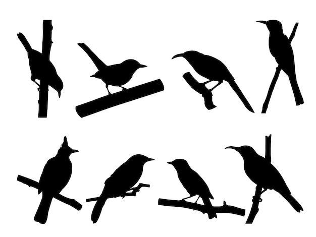 Collectie van vogels op boomtak silhouetten.