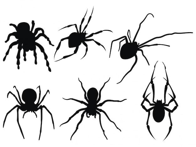Collectie van zwart-witte spinnen.