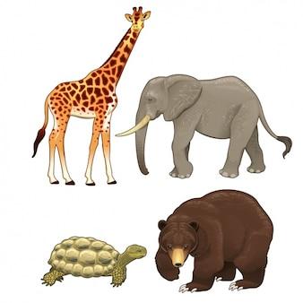 Collectie wilde dieren