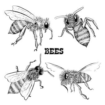 Collecties van honingbij iconen