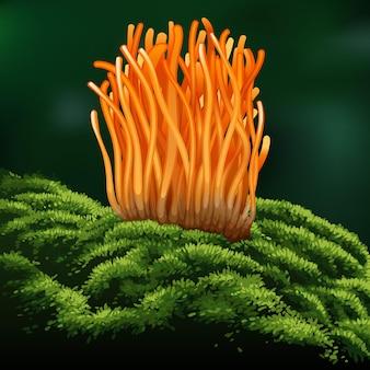Cordyceps militaris. traditionele chinese kruiden, is een paddenstoel die wordt gebruikt voor medicijnen en voedsel dat beroemd is in azië.