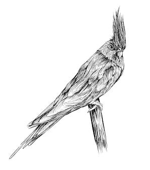 Corella papegaai. hand getekende vectorillustratie