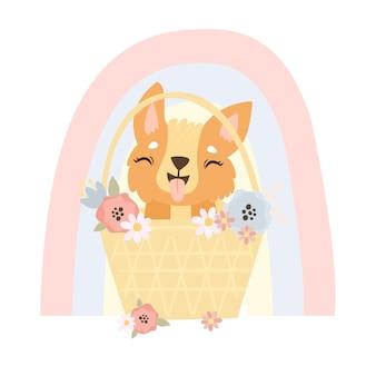 Corgi in een mand met bloemen