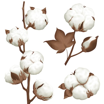 Cotton plant boll realistic set