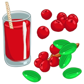 Cranberries berry branch en juice cartoon set