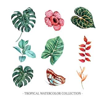 Creatief geïsoleerd waterverfgebladerte, bloemen, vlinder