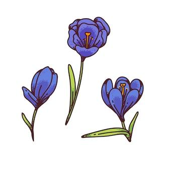Crocus blauwe bloemen lente primula's instellen voor ontwerp wenskaart. overzicht schets illustratie
