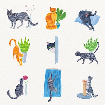 Dagelijkse scènes met lieve katten