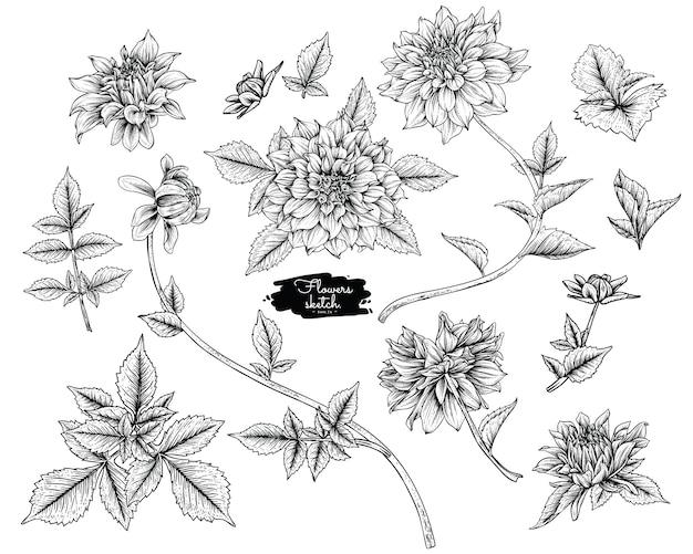 Dahlia leaf en bloemtekeningen