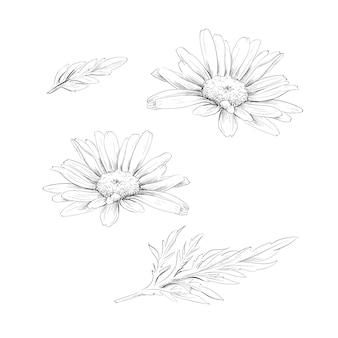 Daisy bloementekening.