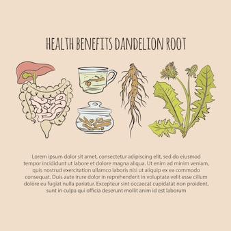 Dandelion gezondheidsvoordelen kleur apotheek