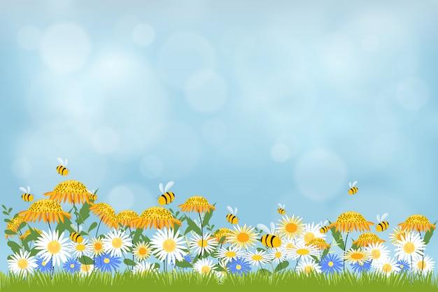 De aardachtergrond van de lente met gras en kamillesgebied.