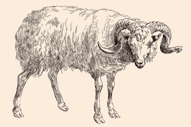 De bergram met grote spiraalvormige hoorns. van een middeleeuwse gravure op een beige achtergrond.
