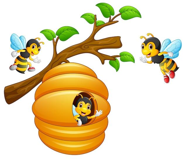 De bijen vliegen uit een bijenkorf die aan een boomtak hangt